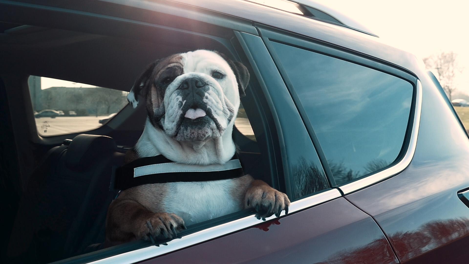 Kutya a hátsó ülésen?